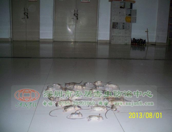 灭鼠工程图片